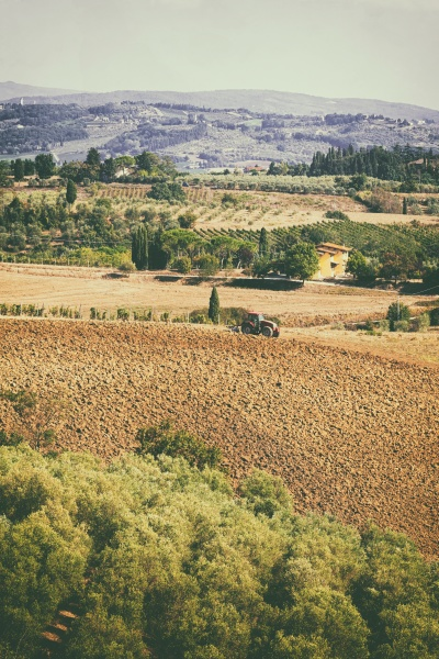 typical tuscan hill landscape with vineyards