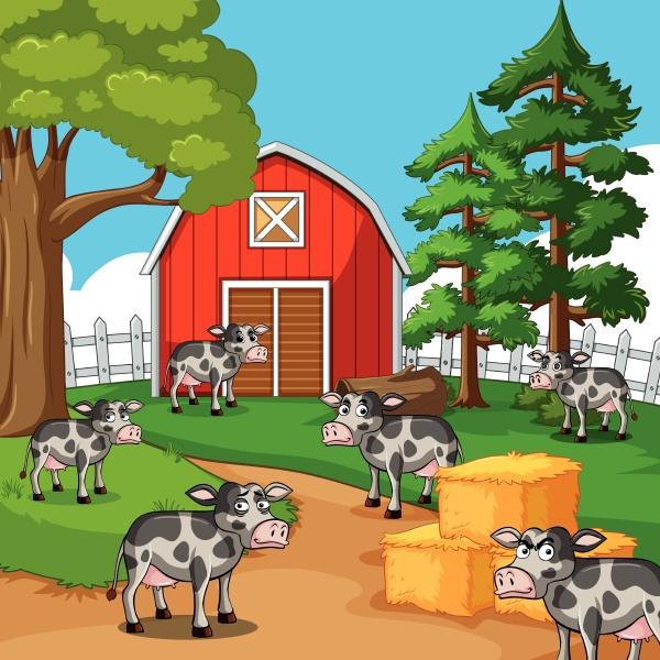 cows in the farmyard