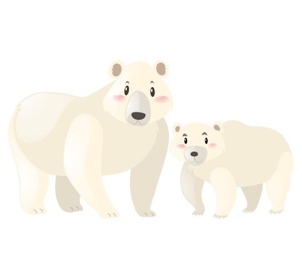 two polar bears on white background