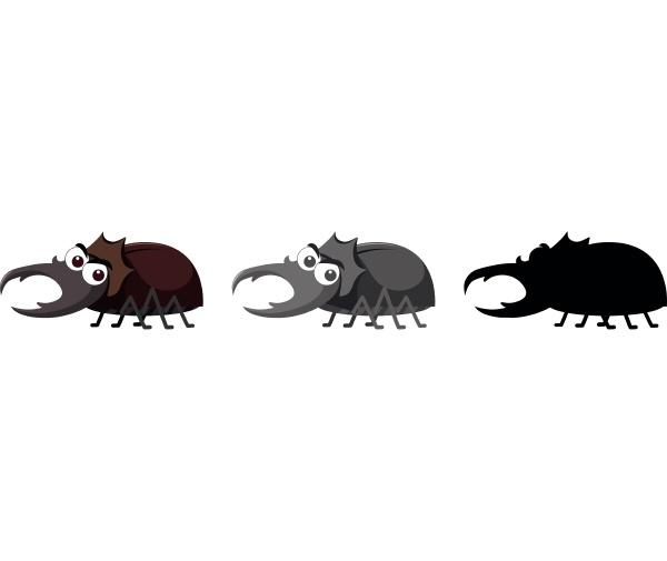 set of beetle character