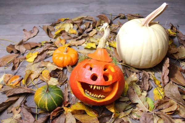 funny pumpkin in autumn leaves