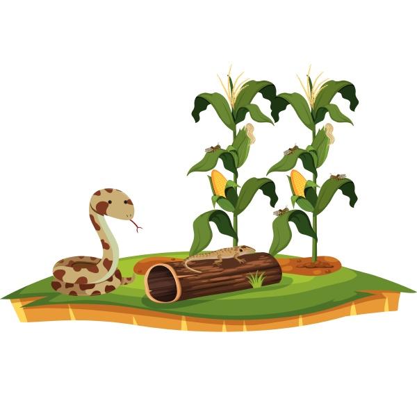 a snake and lizard near corn