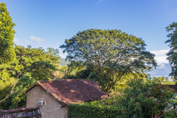 nature at village abraao of tropical