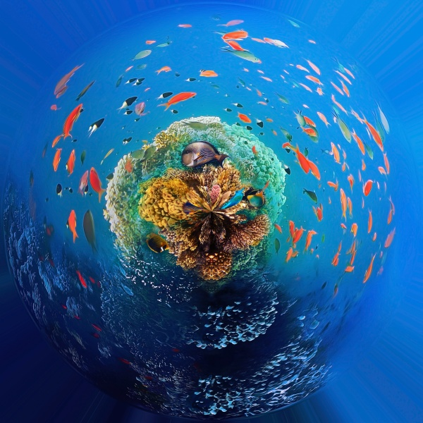 underwater, world., coral, fishes, of, red - 30572544