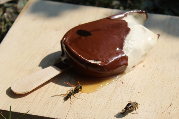 ice cream and insects in the
