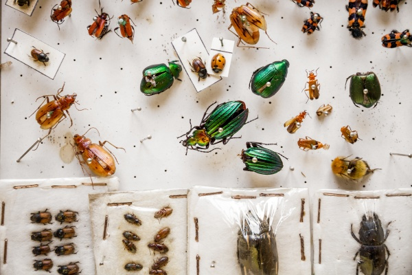 dried insects collection