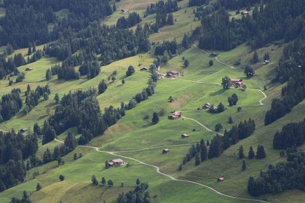 green meadow forest and houses in