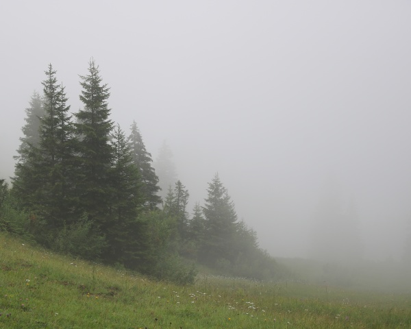 mountain forest on a fogy summer