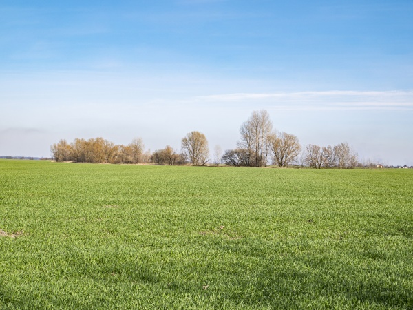 green shoots of a farm field