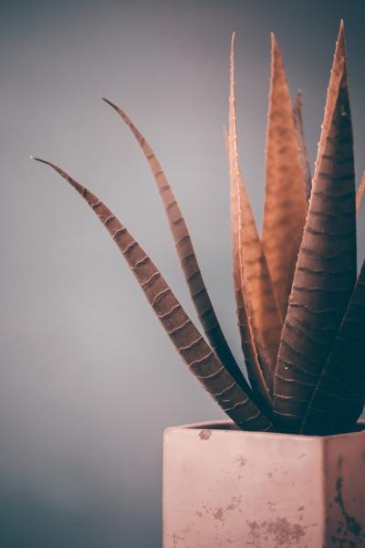 suculent plant in cement vase