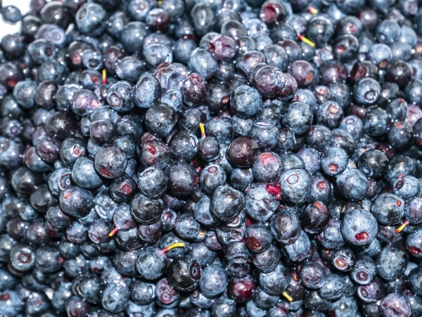 fruits of berries of forest blueberries