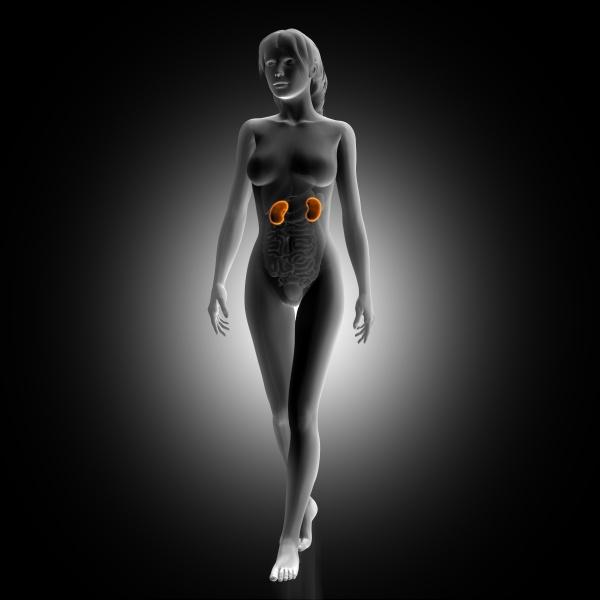 3d render of female medical figure