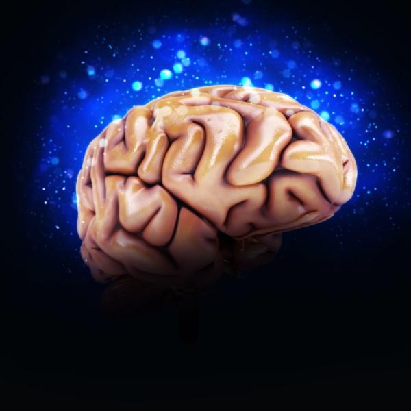 3d render of human brain