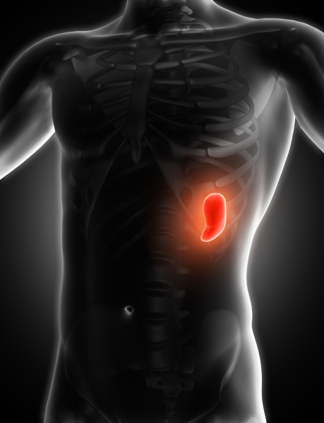 3d medical image showing spleen