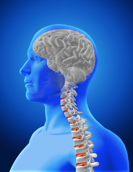 3d medical image showing spine and