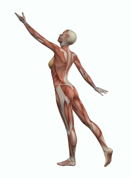 3d female figure reaching with muscle