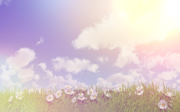 daisies in grass on a sunny
