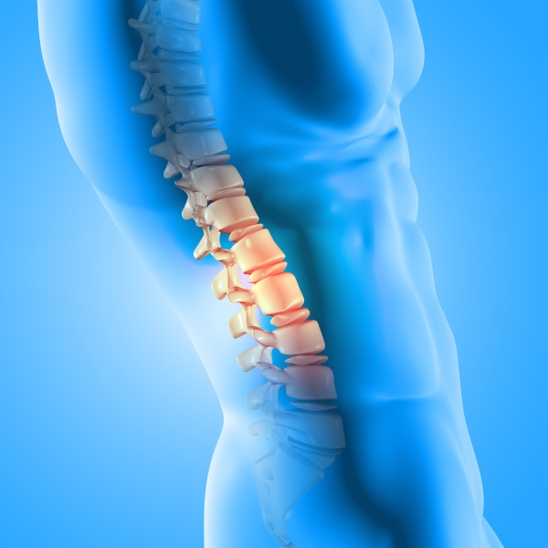 3d male medical figure with spine