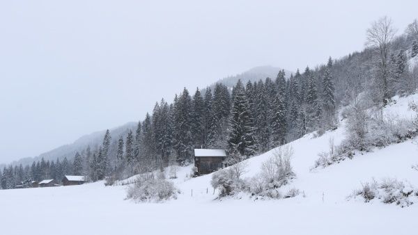 snow covered forest and small chalet