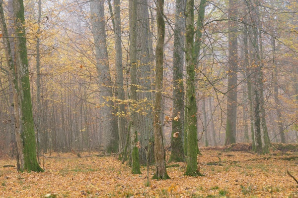 misty morning in autumnal forest