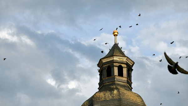 birds gather on the top of