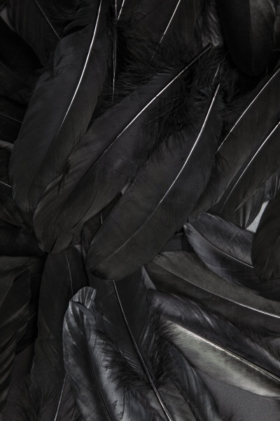 black, feather, abstract, background, texture, dark - 30672878