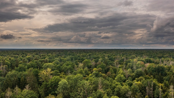 polish part of bialowieza forest to