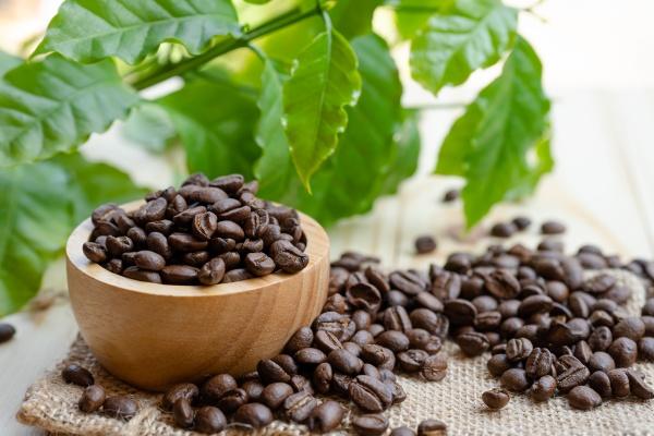 coffee bean medium roasted in wooden
