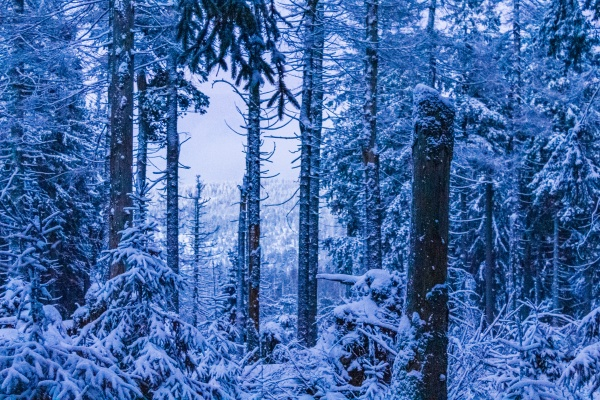 forest landscape at night icy fir