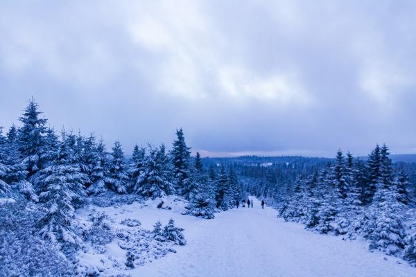 hikers people in snowed in landscape