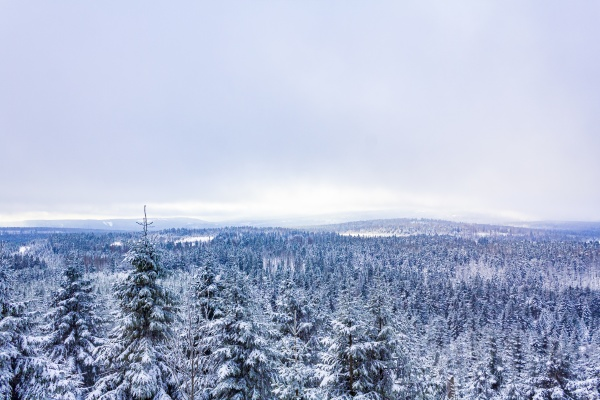snowed, in, icy, fir, trees, landscape - 30699617