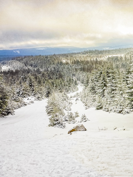 snowed in icy fir trees landscape