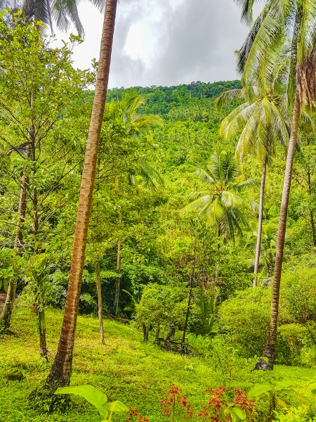 tropical jungle forest with palm trees