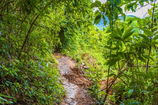 landslide after rain on hiking trail
