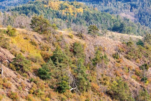 national nature reserve mohelen snake steppe