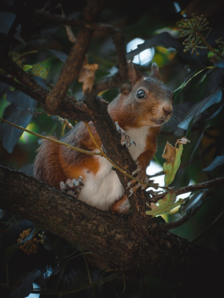 a cute squirrel relaxing on a