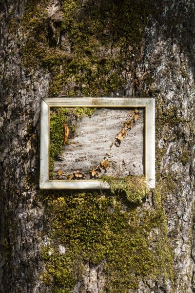 the framed bark
