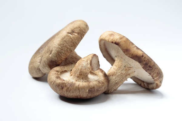 shiitake muchrooms on white