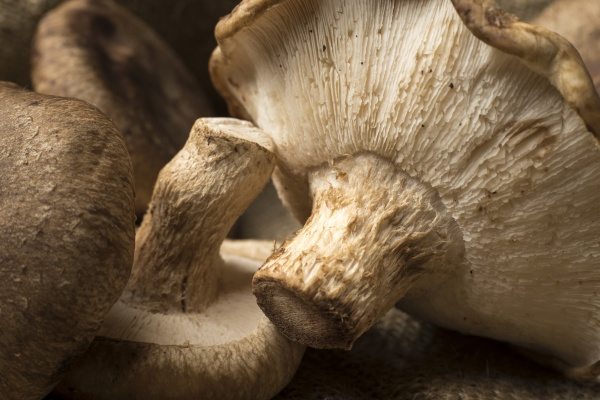 close, up, of, underneath, the, mushrooms - 30781102