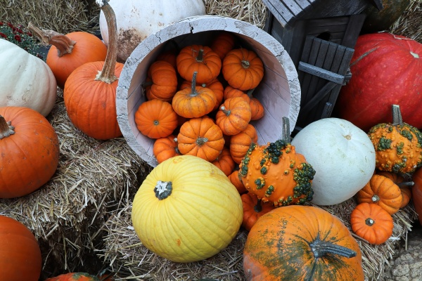 a view of multiple sixed pumkins
