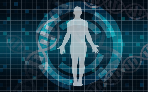 human body medical scan on a