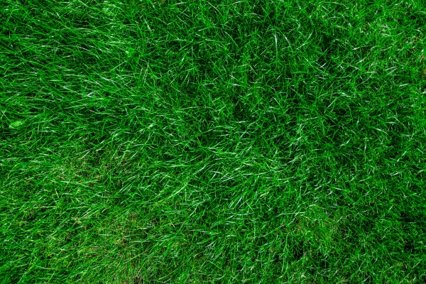 green grass realistic textured background