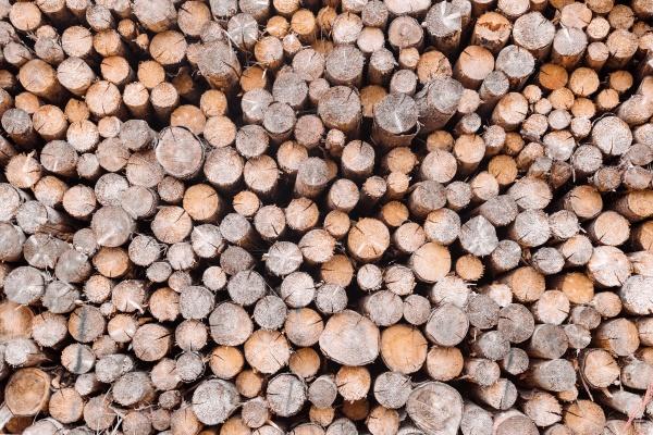 wood in pile outdoor texture