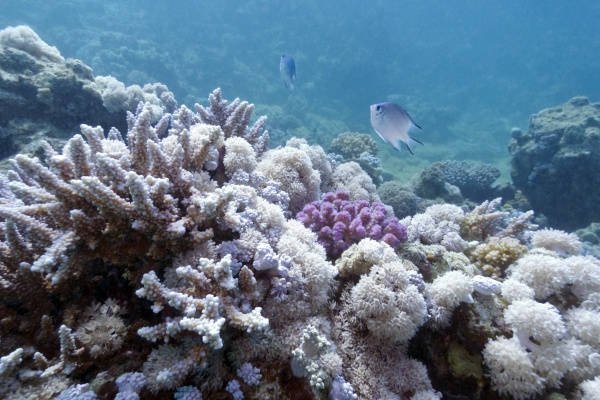 coral, reef, on, the, bottom, of - 30798886