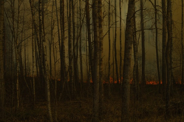 forest in flames forest fire with
