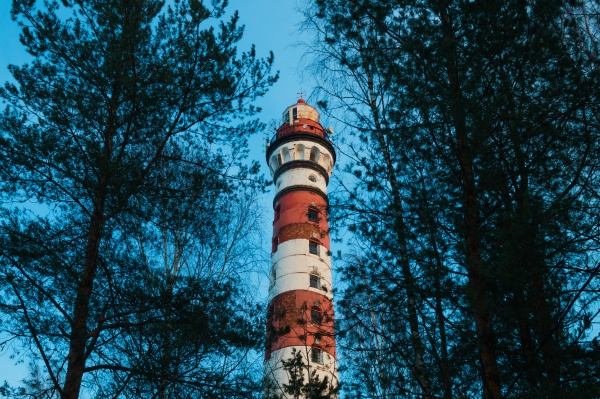 lighthouse in the forest between the