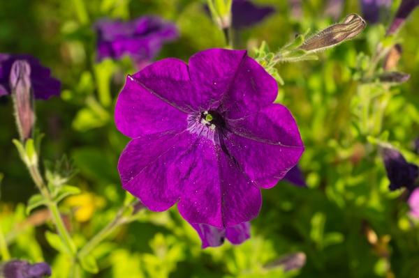 purple flower in the garden floral