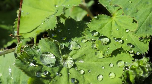 fresh rain drops in close up