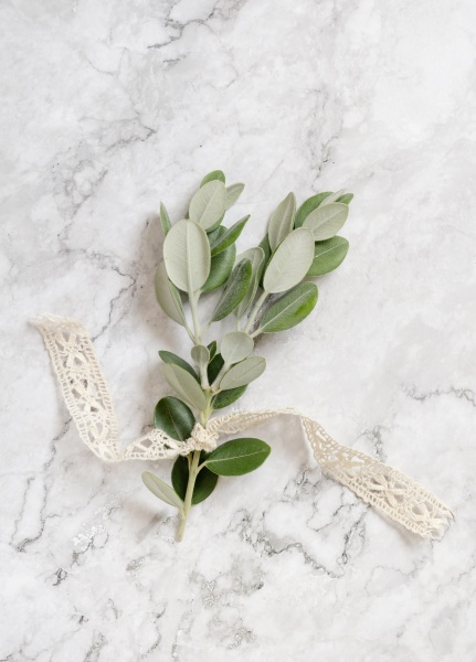eucalyptus branch with ribbon on marble