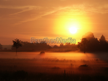 morning fog 03